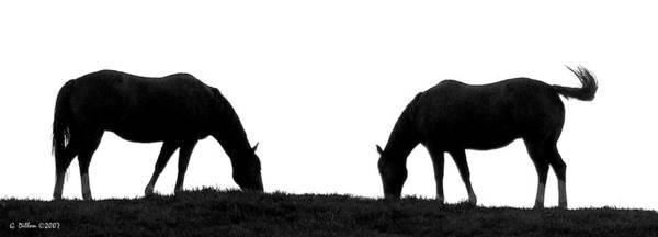 Photograph - Companions by Grace Dillon