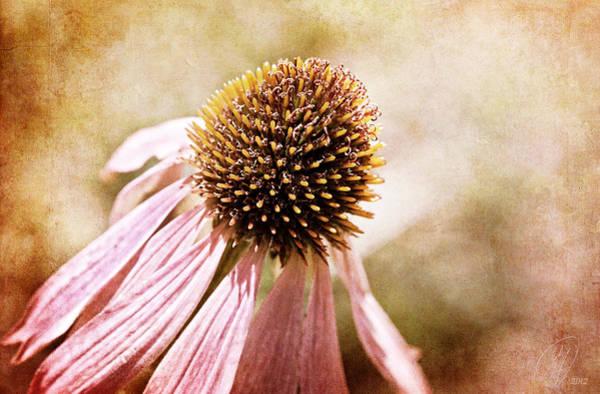 Wall Art - Digital Art - Cone Flower by Margaret Hormann Bfa