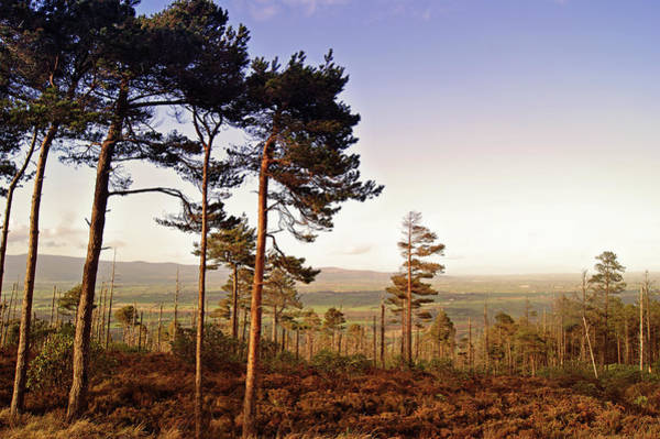 Horizontal Landscape Photograph - Conifer Woods In Vee Gap by Gregoria Gregoriou Crowe fine art and creative photography.