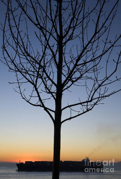 Elliot Bay Wall Art - Photograph - Container Ship And Silhouette Of Tree, Elliot Bay, Puget Sound by Paul Edmondson