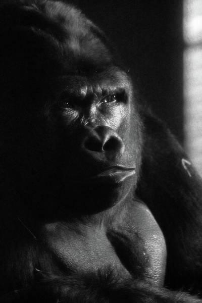 Photograph - Contemplation by Scott Hovind