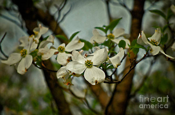 Photograph - Cool Breeze by Lois Bryan