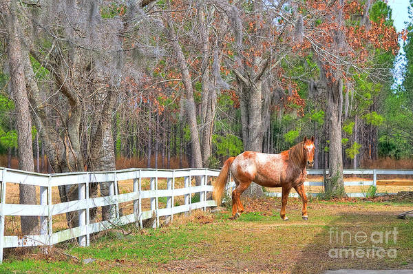 Photograph - Coosaw - Outside The Fence by Scott Hansen