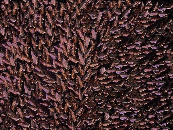 Digital Art - Copper Leaf by David Dehner