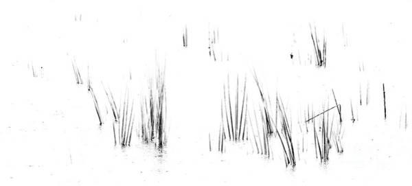 Photograph - Cord Grass II by David Waldrop