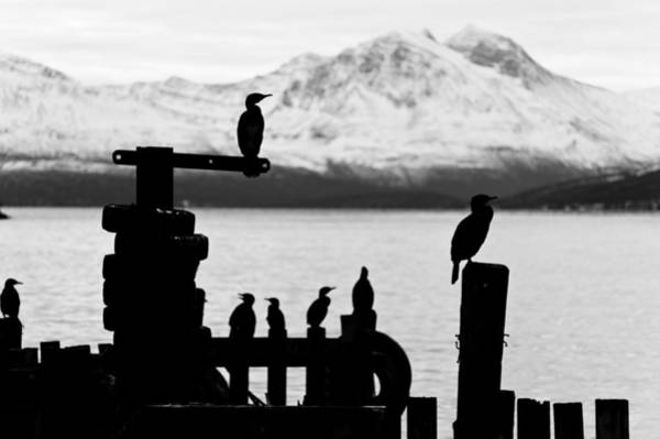 Photograph - Cormoran Bird Sits On A Pier In Winter In A Fjord In Norway by U Schade