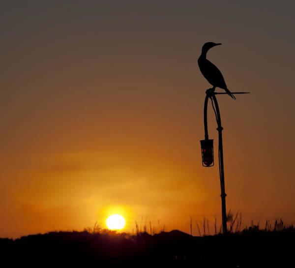 Blye Photograph - Cormorant Silhouette by Kenneth Blye