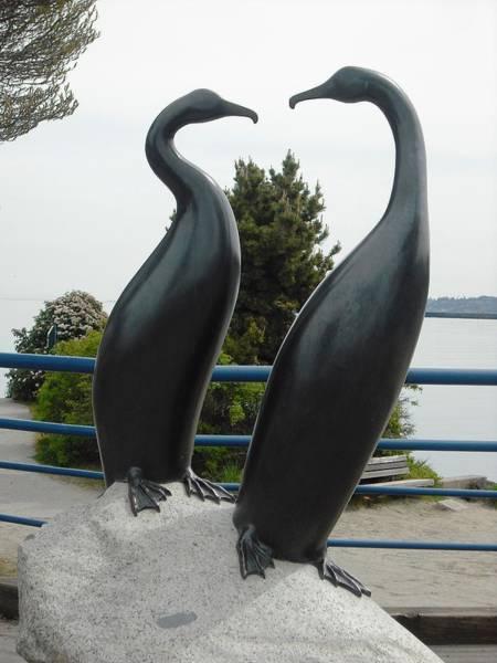 Cormorants In Port Angeles Art Print