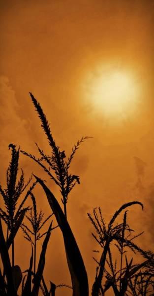 Photograph - Corn Field Haze  by David Dehner