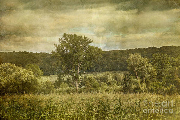 Photograph - Corn Field On A Windy Day by Sandra Cunningham