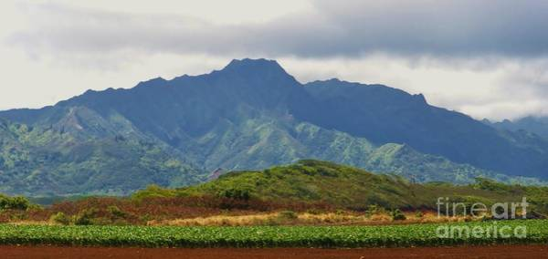 Photograph - Corn In Kauai by Jeanie Watson