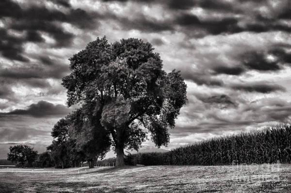 Cornfield Photograph - Cornfield by HD Connelly