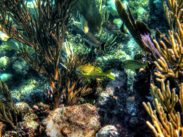 Photograph - Costa Maya Tm 0012 by Lance Vaughn