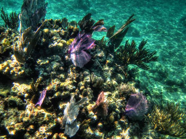 Photograph - Costa Maya Tm 008 by Lance Vaughn