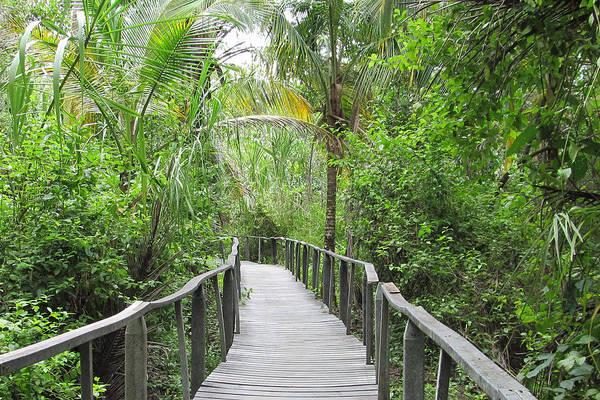 Cahuita Photograph - Costa Rica Jungle Boardwalk Bridge by Dorcas Collazo Paden