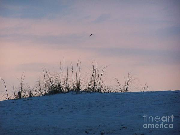 Photograph - Cotton Candy Sky by Jeanne Forsythe