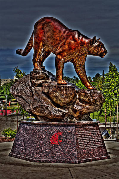 David Patterson Photograph - Cougar Pride by David Patterson