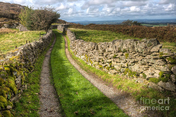 Gravel Road Photograph - Country Lane by Adrian Evans