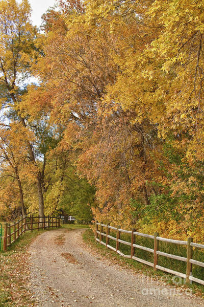Photograph - Country Ranch Road Autumn Portrait by James BO Insogna