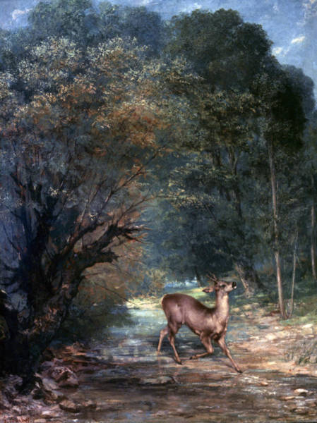 Photograph - Courbet: Hunted Deer, 1866 by Granger