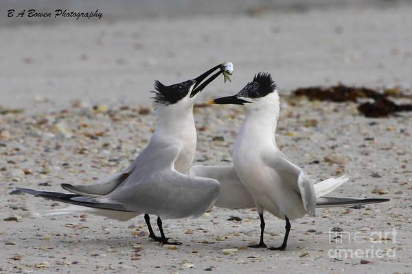 Photograph - Courtship by Barbara Bowen