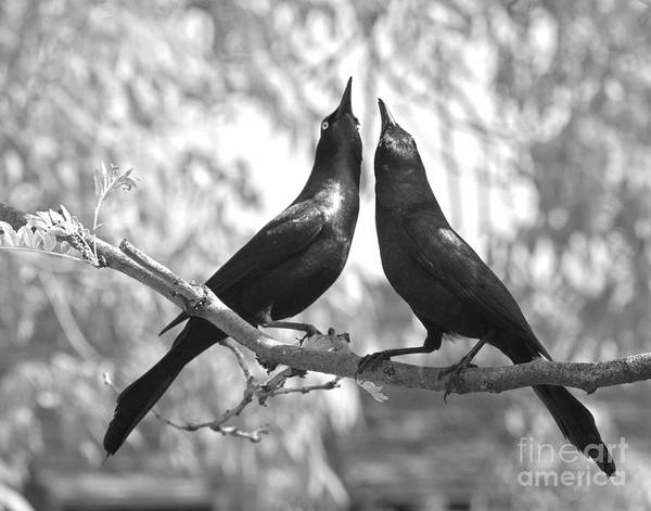 Wall Art - Photograph - Courtship by Jan Piller