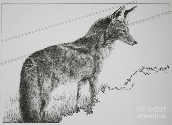 Wall Art - Drawing - Coyote Sunset by Tracy L Teeter