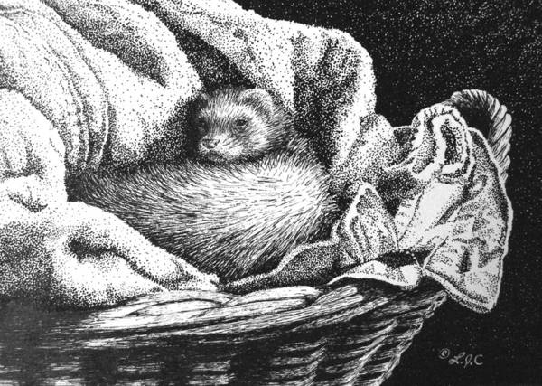 Ferrets Drawing - Cozy Sleeping Spot by Linda Creapeau