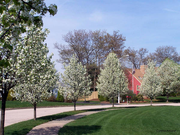 Art Print featuring the photograph Crab Apple Trees by Cynthia Amaral