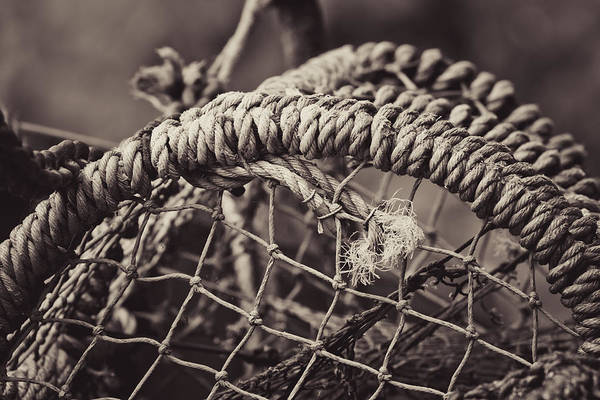 Crabbing Photograph - Crab Cage by Justin Albrecht