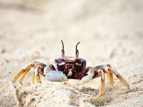 Phi Photograph - Crab by MotHaiBaPhoto Prints
