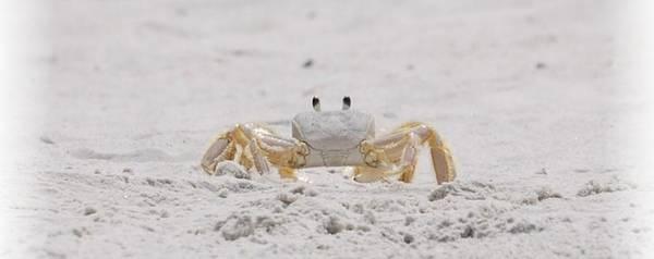 Photograph - Crabby Eyes by Judy Hall-Folde