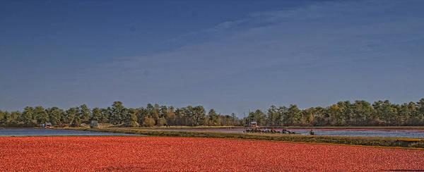 Photograph - Cranberry Harvest by Tom Singleton