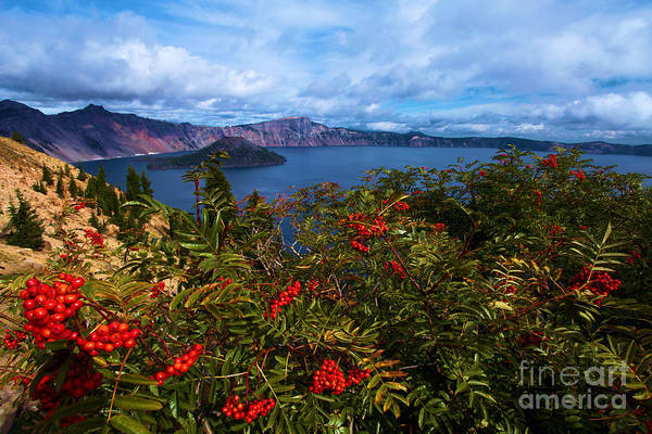Photograph - Crater Berries by Adam Jewell