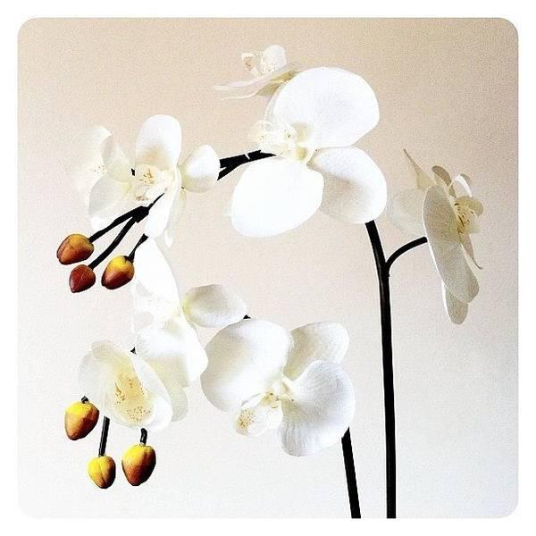 Petals Wall Art - Photograph - Cream by Mark B