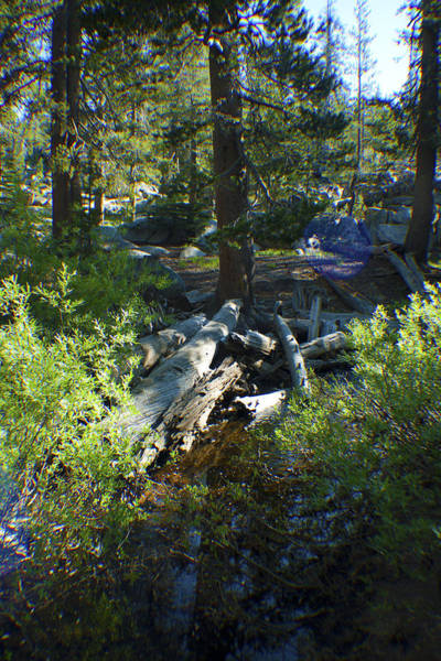 Photograph - Creek In White Wolf by M Valeriano