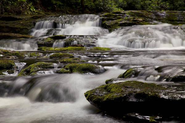 Photograph - Creek Moss by Sara Hudock