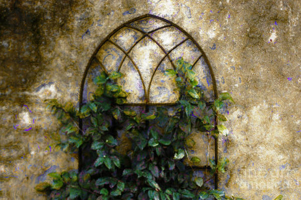 Photograph - Creeping Vine 1 by Donna Bentley
