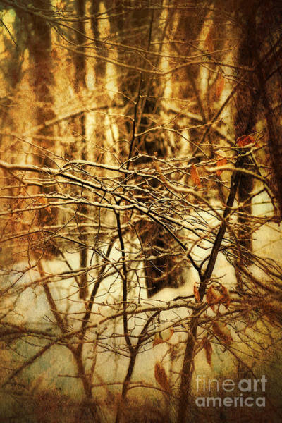 Photograph - Creepy Scene Of Trees In Woods by Sandra Cunningham
