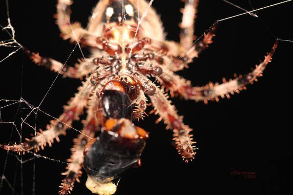 Photograph - Creepy Spider by Ericamaxine Price