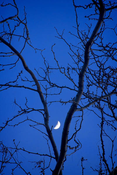 Photograph - Crescent Moon In The V Of Trees by James BO Insogna