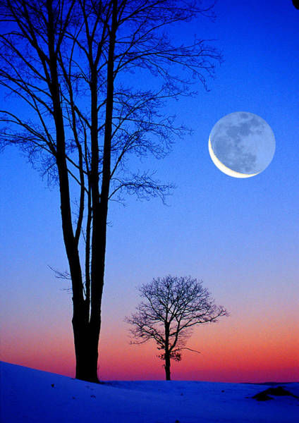 Crescent Through Trees Art Print