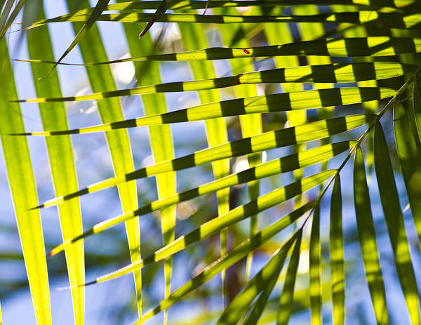 Crisscross Wall Art - Photograph - Crisscrossed Leaves by Anya Brewley schultheiss