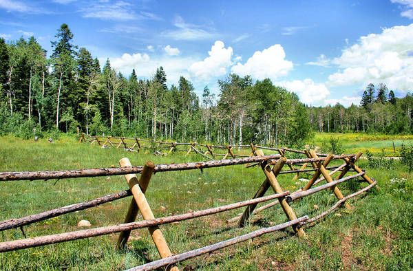 Photograph - Crossfencing by Kristin Elmquist