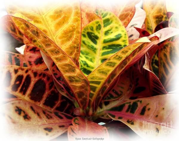 Photograph - Croton Plant With Watercolor Effect by Rose Santuci-Sofranko