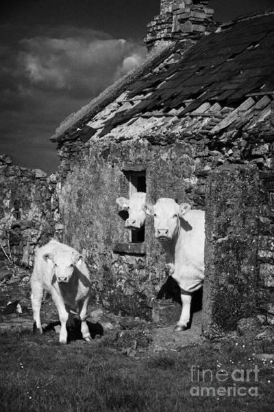 Wall Art - Photograph - Crowded Irish Rural House by Joe Fox