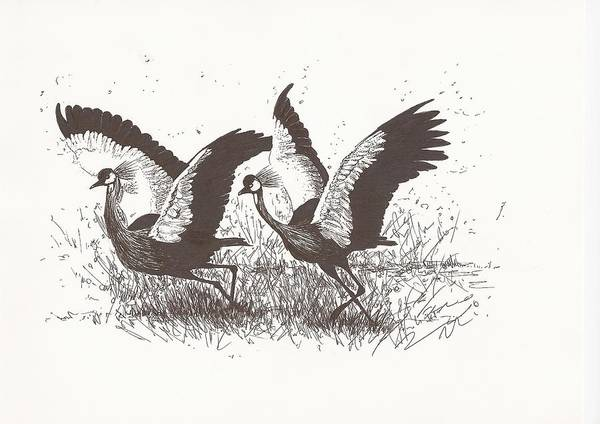 White Goose Drawing - Crowned Cranes Ready For Take-off by Pat Barker
