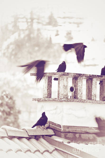 Photograph - Crows On A Roof by Silvia Ganora