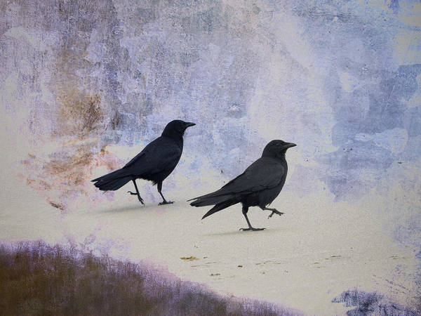 Bird Pair Photograph - Crows Walking On The Beach by Carol Leigh