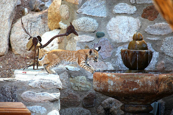 Wall Art - Photograph - Cub Gets A Drink by Dan Nelson